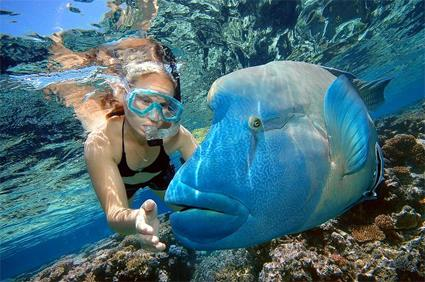 Croisi re la grande barri re de corail en voilier cairns - Best place to dive the great barrier reef ...